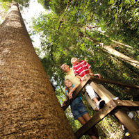 SPRING SCHOOL HOLIDAYS AT BUNYA MOUNTAINS