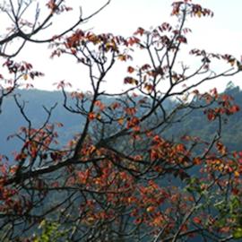 BUNYA MOUNTAINS ACCOMMODATION CENTRE