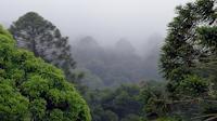 BUNYA MOUNTAINS WEATHER