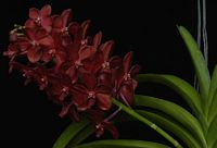 LIVING ORCHIDS WORKSHOP - HEALING ORCHIDS AUSTRALIA